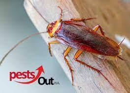 Pests Out WA